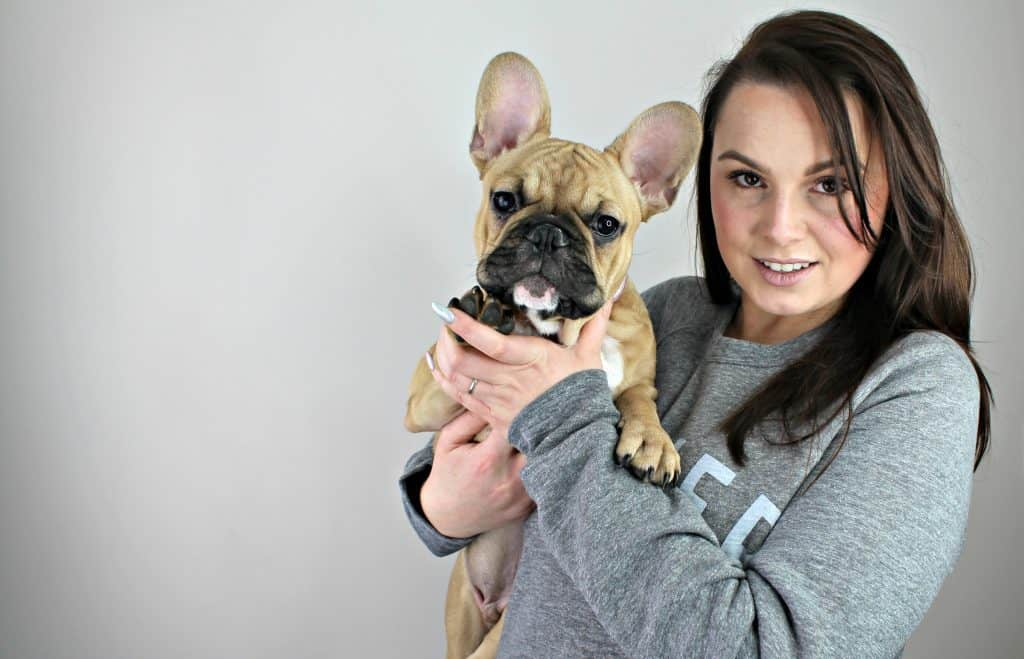 French bulldog being held