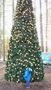 outdoor-christmas-tree