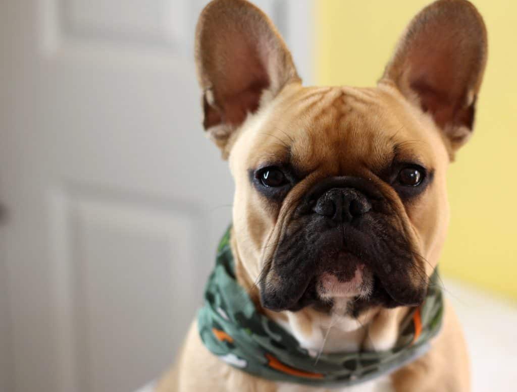 Buff Scarves From BuffWear: Junior Buff & Dog Buff