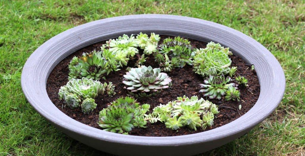 Garden project/