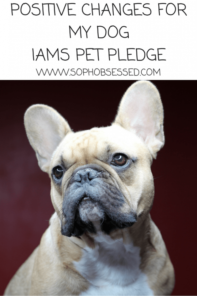 IAMS Pet Pledge